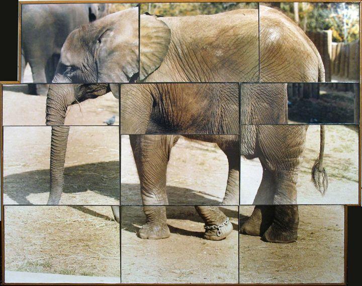 Frank,-Jonathan---Elephant-#3